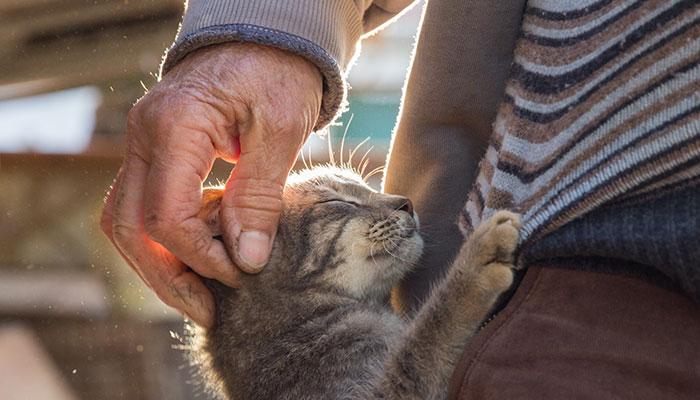 Smartheart Gold markalı kedi ve köpek mamaları M Oil istasyonlarında ücretsiz