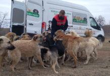 Tüpraş'ın sokak hayvanlarına yiyecek ihtiyacı desteği sürüyor