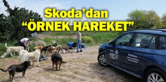 SKODA İyilik Araçları Sokak Hayvanlarını Unutmadı